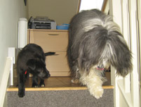 Image: Finnbar and Brewster, Firebird PR's resident four-legged recruits